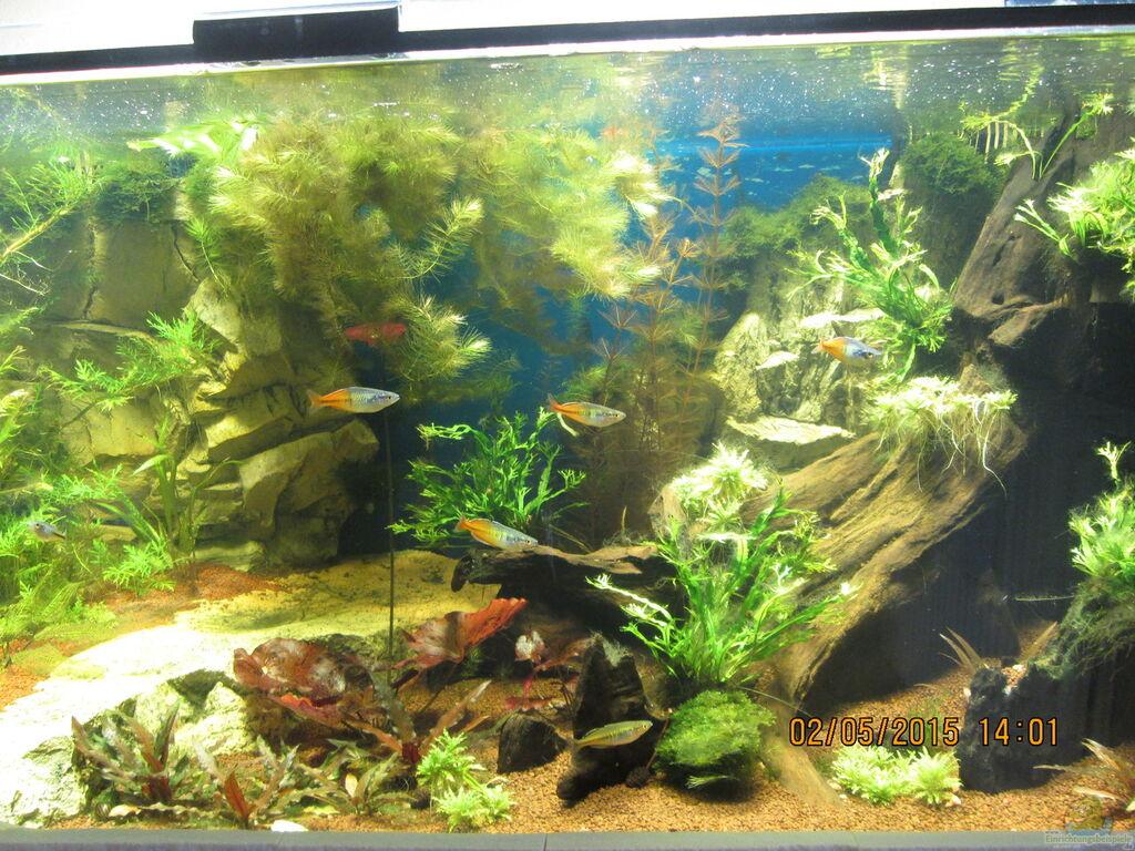 Aquarium von christian grunwald wohnzimmer - Aquarium in der wand ...