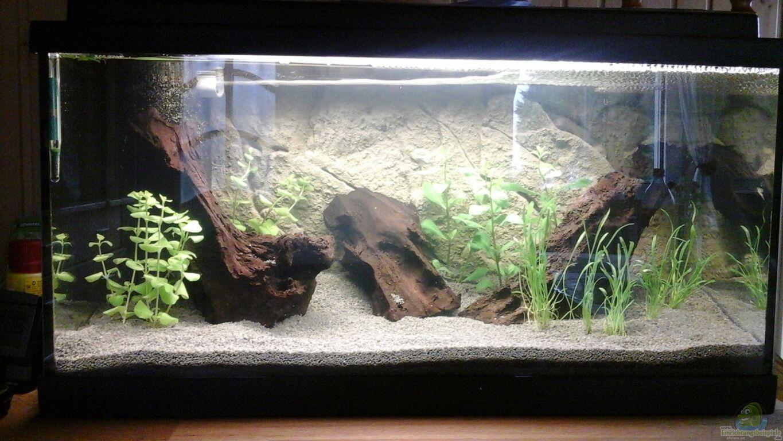 aquarium von ulf garnelen auf der diele. Black Bedroom Furniture Sets. Home Design Ideas