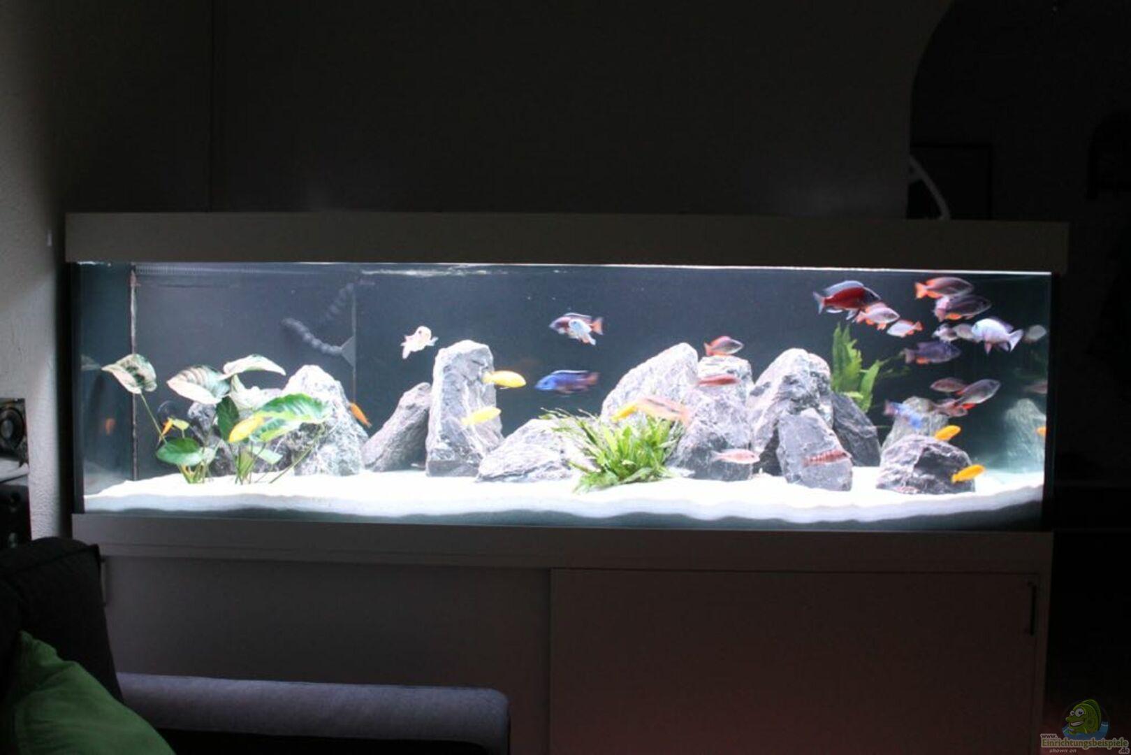 aquarium von andi15 31211 malawi non mbuna. Black Bedroom Furniture Sets. Home Design Ideas