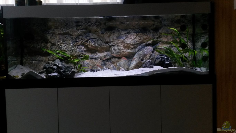 led aquarium beleuchtung aquarium led beleuchtung s wasser youtube led aquarium beleuchtung. Black Bedroom Furniture Sets. Home Design Ideas