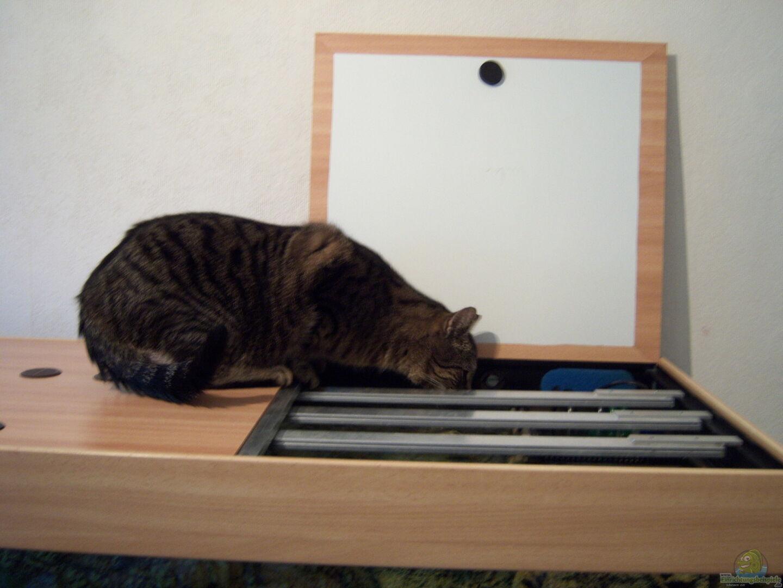 gerne auch als Katzentränke genutzt aus Gesellschaft 480 ( nur noch ...