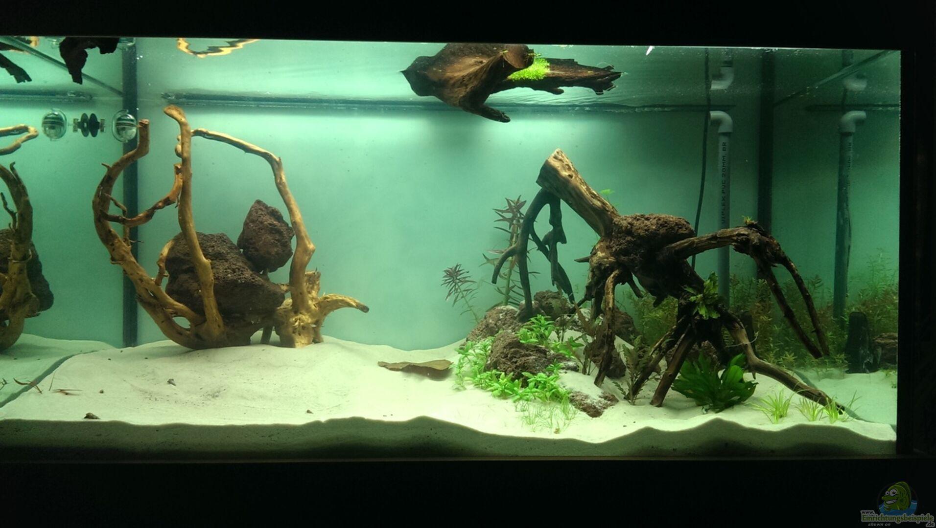 aquarium von daniel gall 31245 jungle underwater. Black Bedroom Furniture Sets. Home Design Ideas