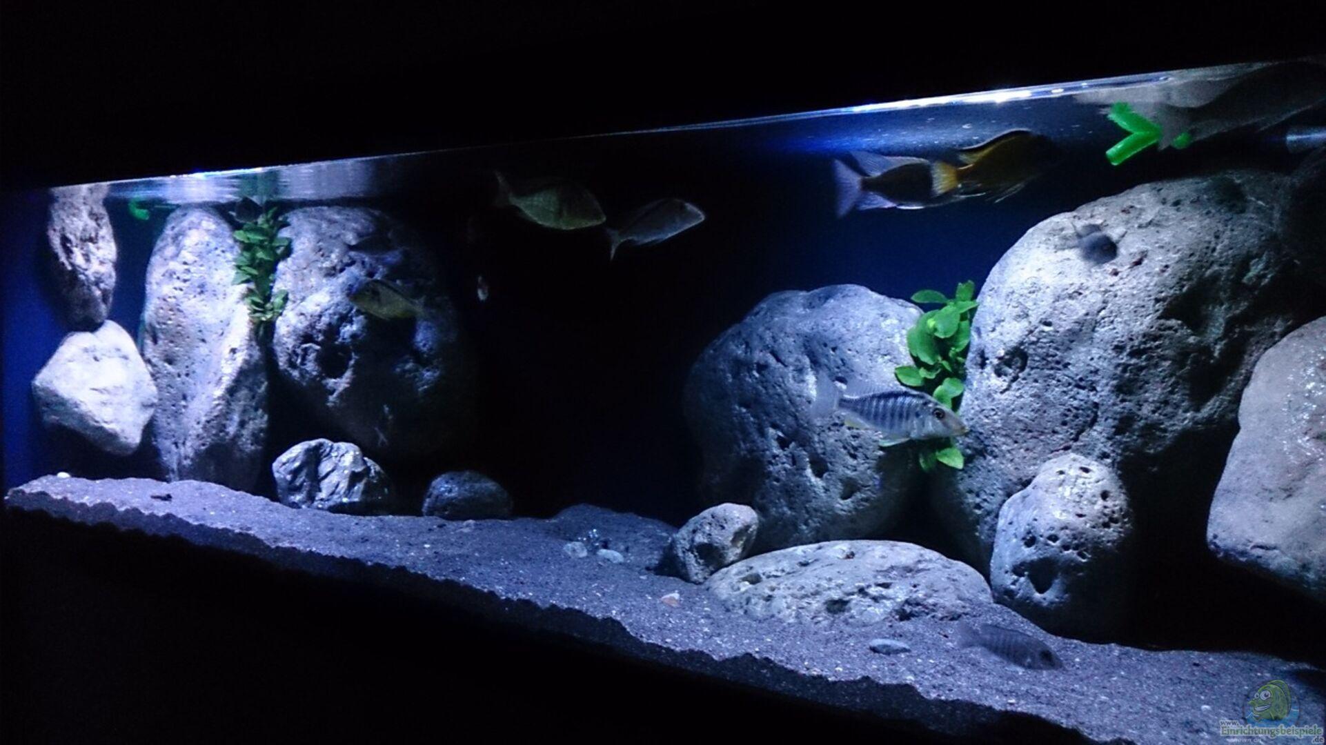 schwarzer sand malawi vorstellung meines neuen 300 liter malawibecken aquarium forum schwarzer. Black Bedroom Furniture Sets. Home Design Ideas