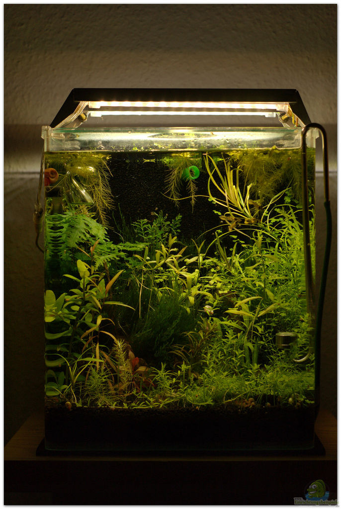 Example no 31269 from the category community tanks for Aquarium 30 litres