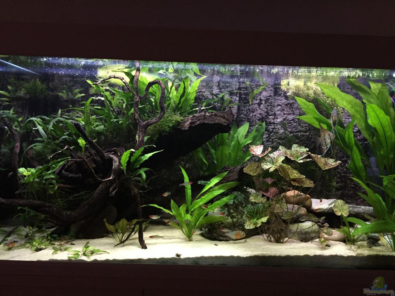 aquarium von f bi ch eheim scubaline 460. Black Bedroom Furniture Sets. Home Design Ideas