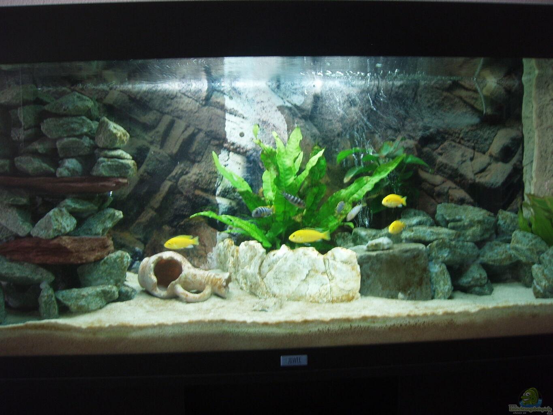 Aquarium von malawi z rich mein erstes aquarium for Mein aquarium