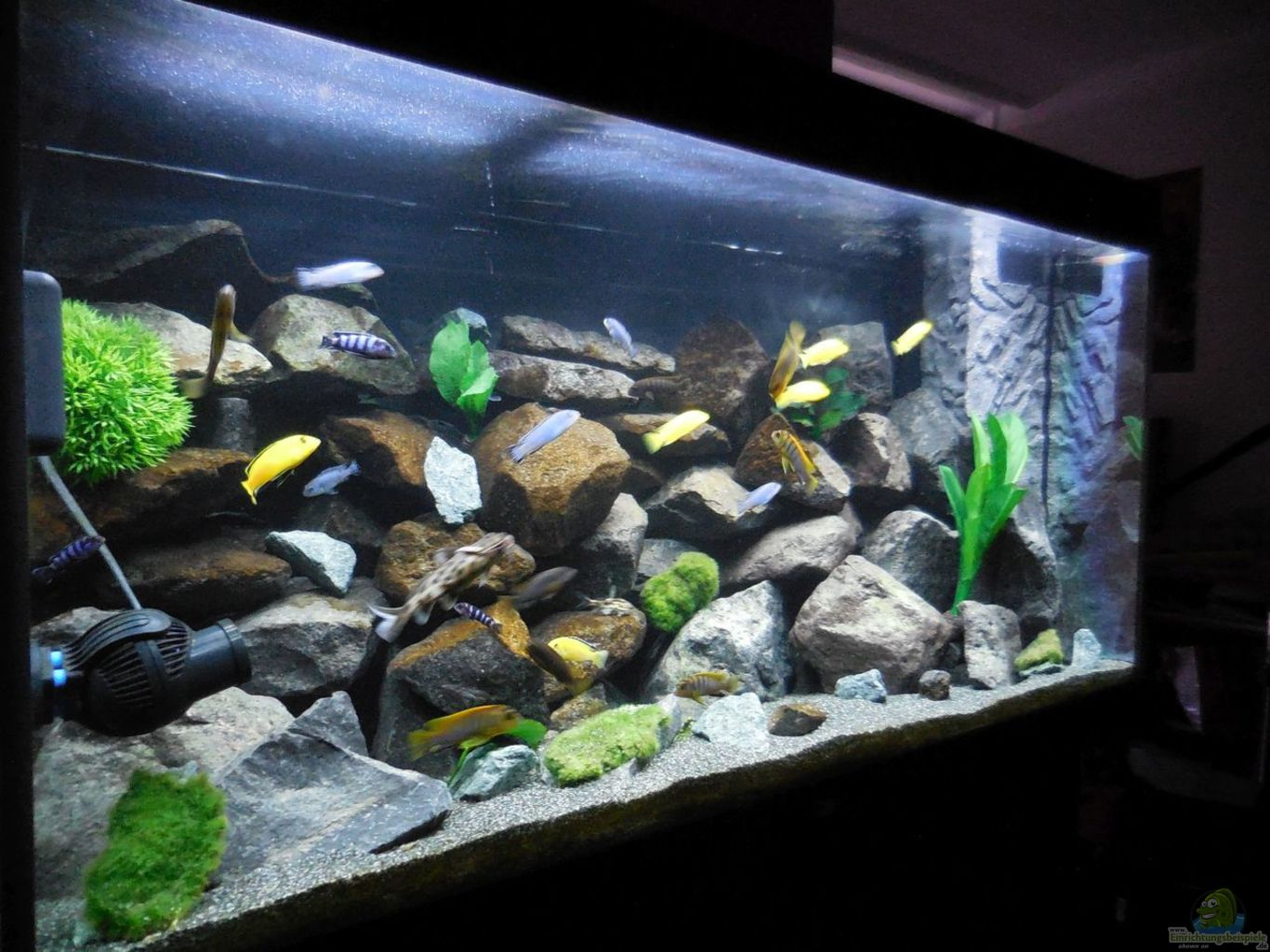 aquarium kevin s malawibecken aus kevin s malawibecken von kevin leonhard. Black Bedroom Furniture Sets. Home Design Ideas