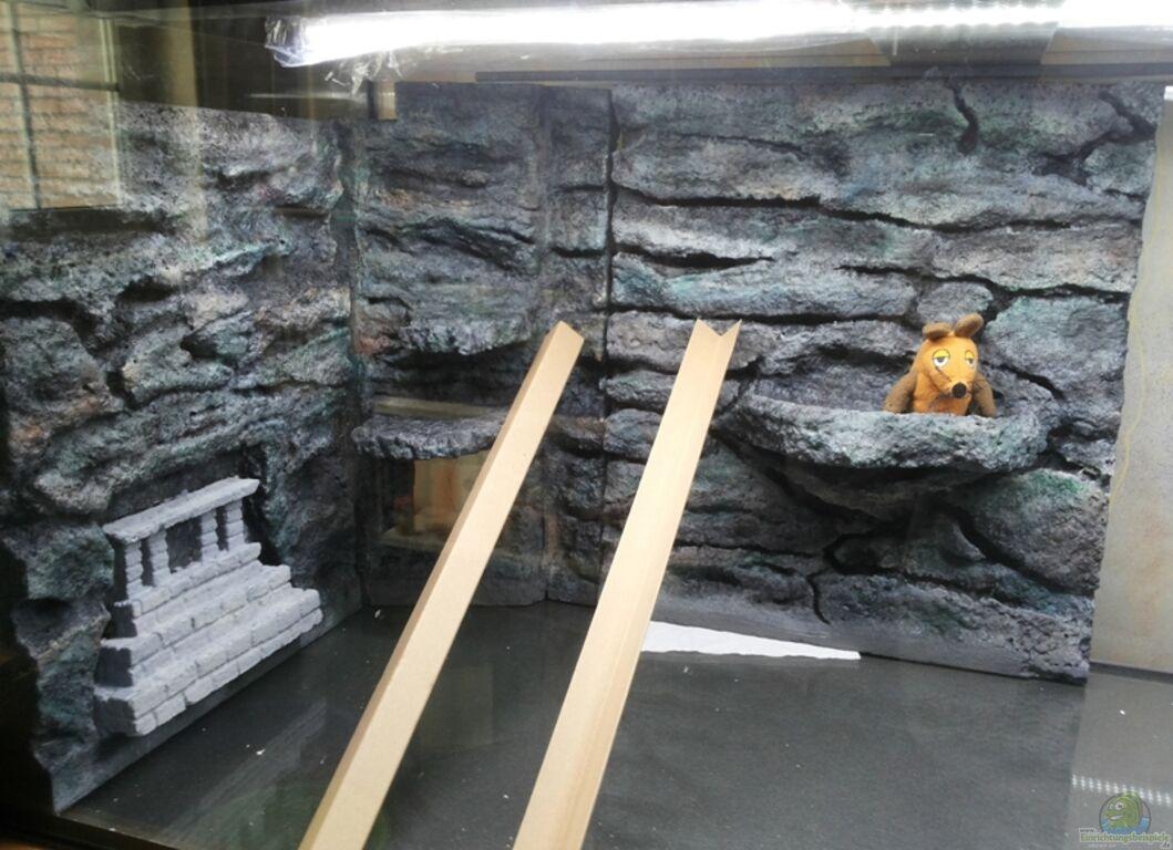 aquarium von copplepot lord schwerpunkt s damerika. Black Bedroom Furniture Sets. Home Design Ideas