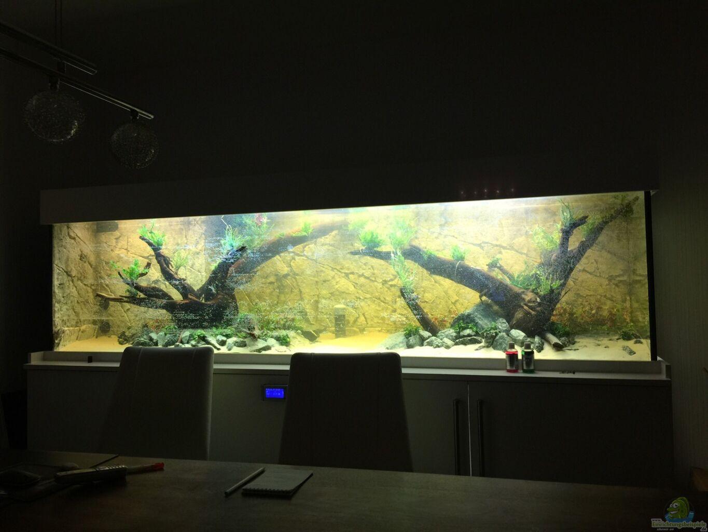 aquarium von insulaner becken 31356. Black Bedroom Furniture Sets. Home Design Ideas