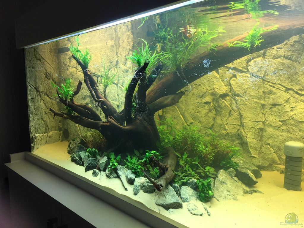 Aquarium Deko Selber Bauen Anleitung
