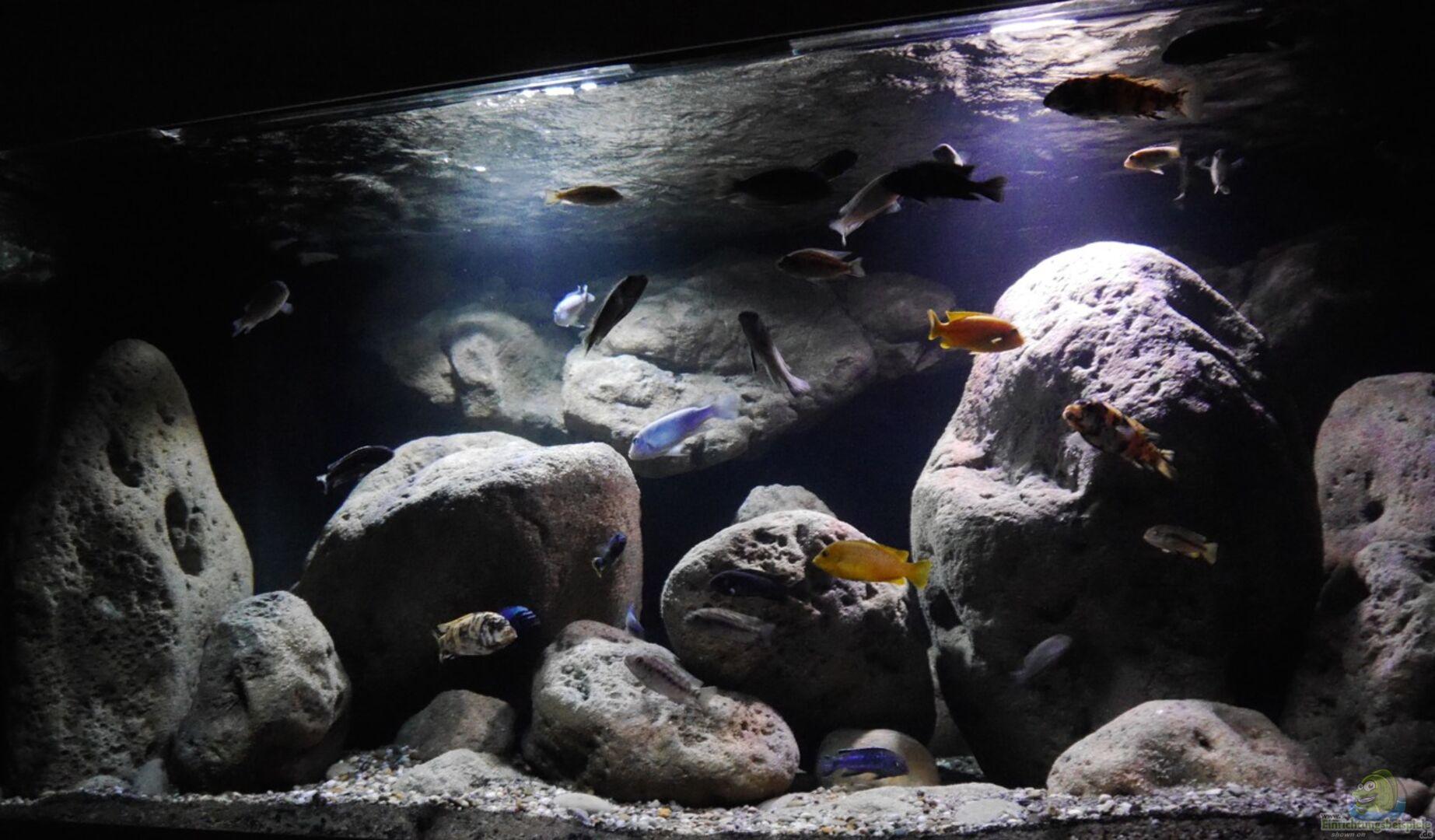 Aquarium von Jan Steger (31368): Big Rock Mbuna