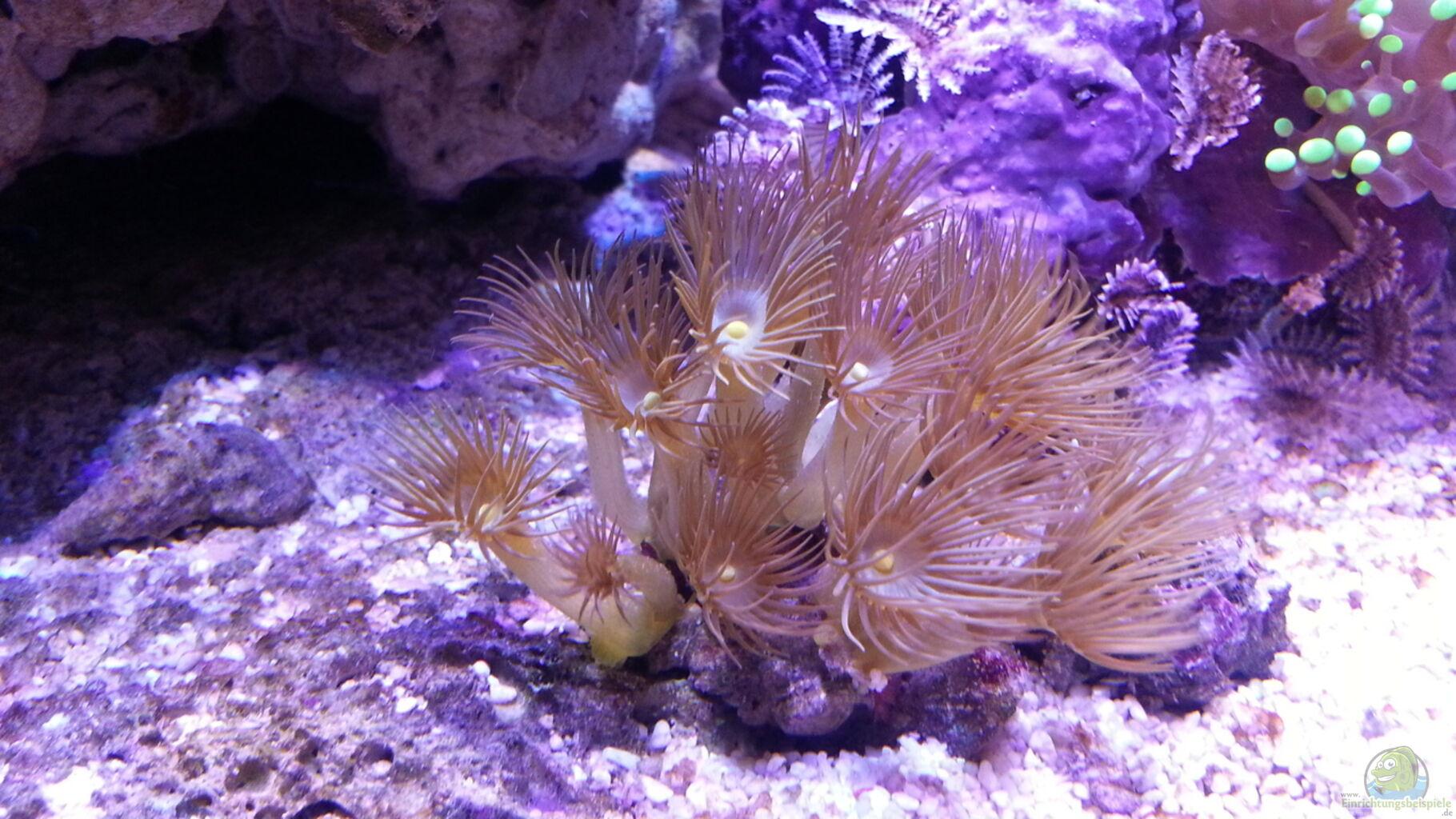 Primo nanoreef 60 litri forum acquariofilia facile for Pesci per acquario piccolo