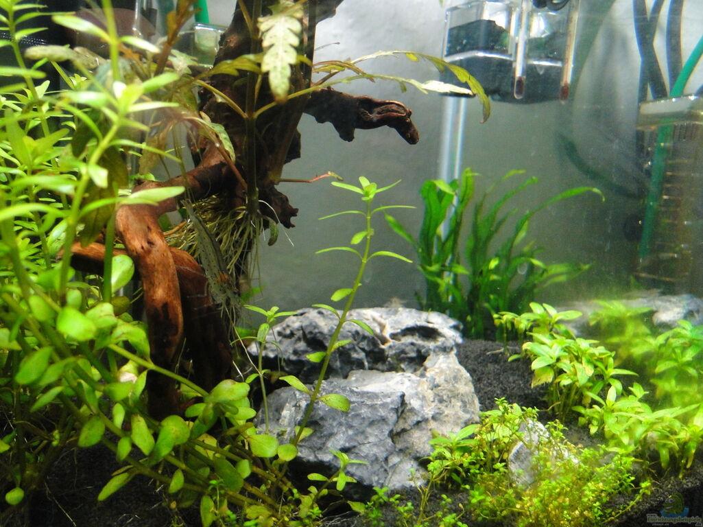 Aquarium von lolo: Mein erstes Aquascape