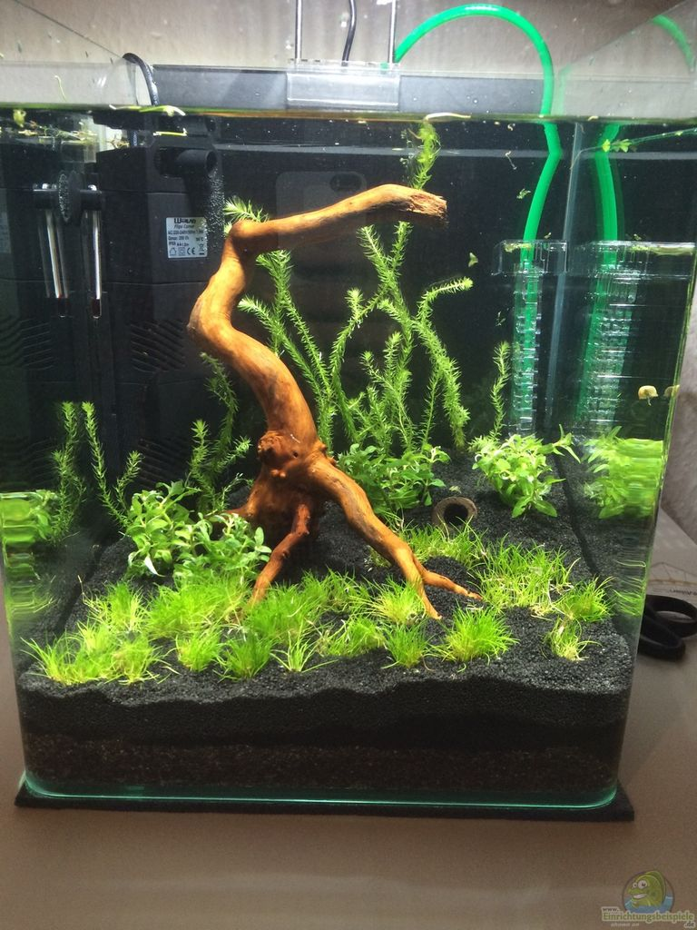 Example no 31384 from the category invertebrates for Aquarium cuve