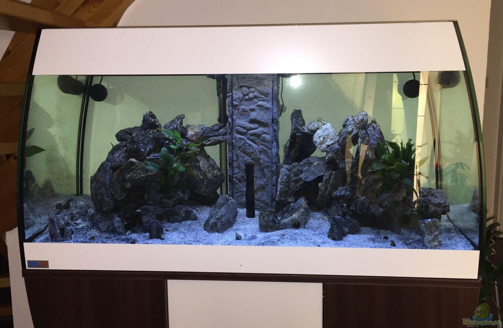 aquarium von dennel 31446 scubabay malawi. Black Bedroom Furniture Sets. Home Design Ideas