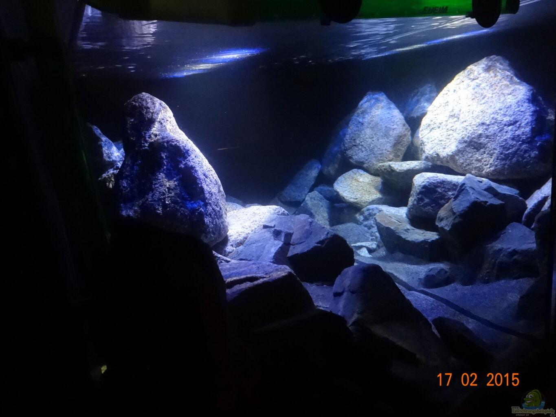 Aquarium von malawi einsteiger mbuna hardscape for Aquarium einsteiger
