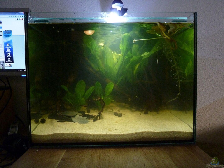 aquarium von johannesdd 31462 kleines ufer. Black Bedroom Furniture Sets. Home Design Ideas