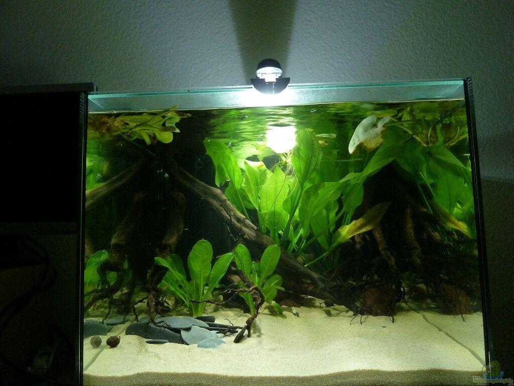 aquarium von johannesdd kleines ufer. Black Bedroom Furniture Sets. Home Design Ideas