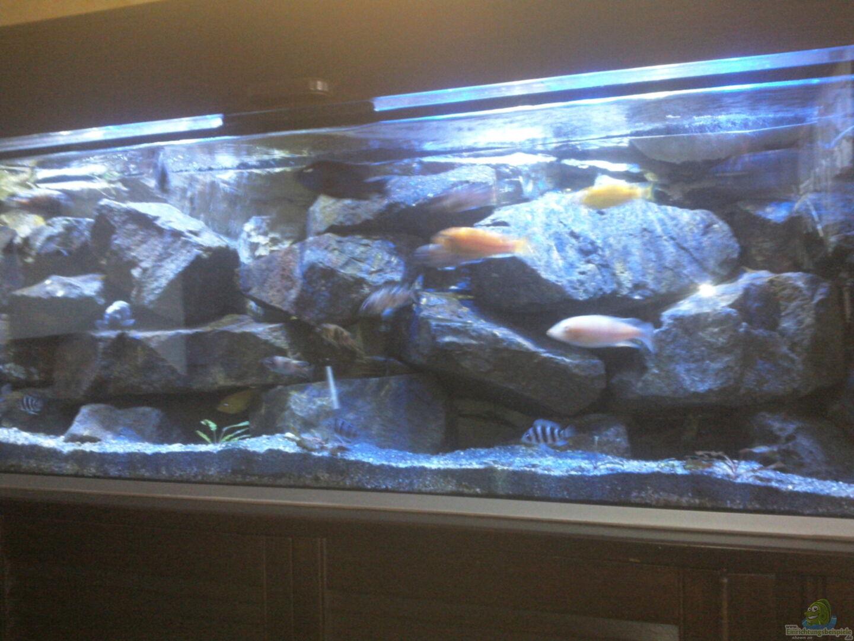 aquarium von malawikrebs becken 31476. Black Bedroom Furniture Sets. Home Design Ideas