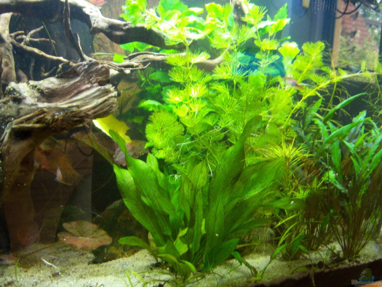 Example no 31493 from the category asia australia for Decoration zen aquarium