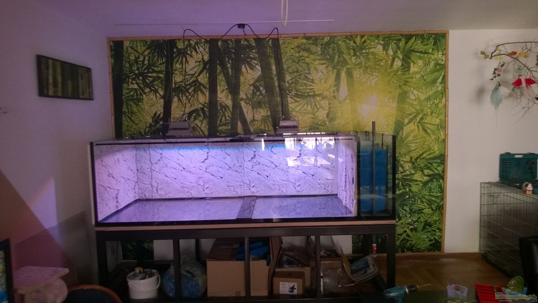 Wildes Wohnzimmer Aquarium Leo Fan Wildes Wohnzimmer