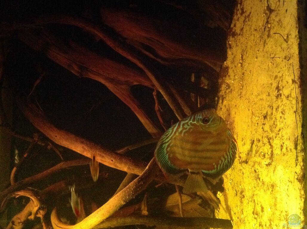 aquarium von amamazonas diskus diskus biotop. Black Bedroom Furniture Sets. Home Design Ideas