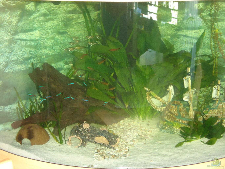 coole aquarium deko trendy led quallen aquarium quallen. Black Bedroom Furniture Sets. Home Design Ideas