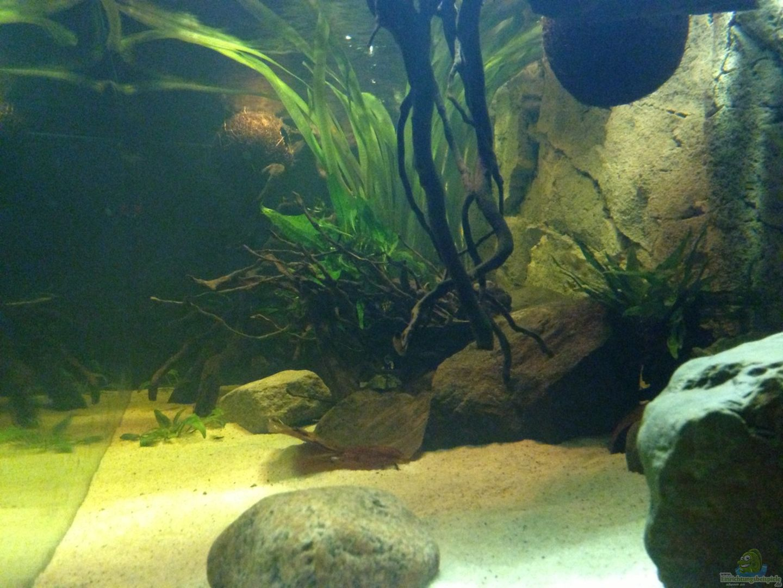 Aquarium von sml becken 31552 einrichtungsbeispiele for Aquarium becken