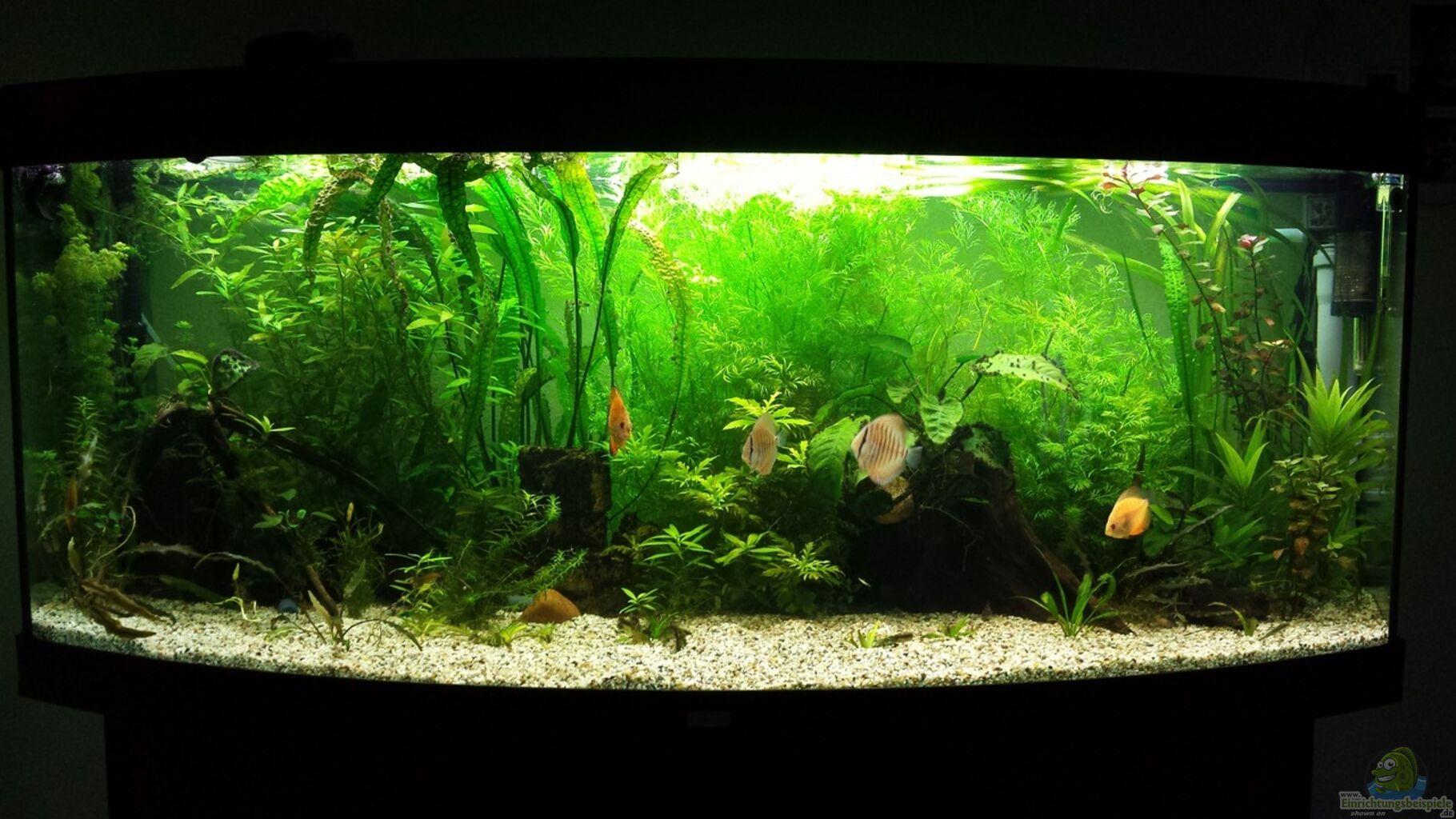 Aquarium von martin diskus for Diskus aquarium
