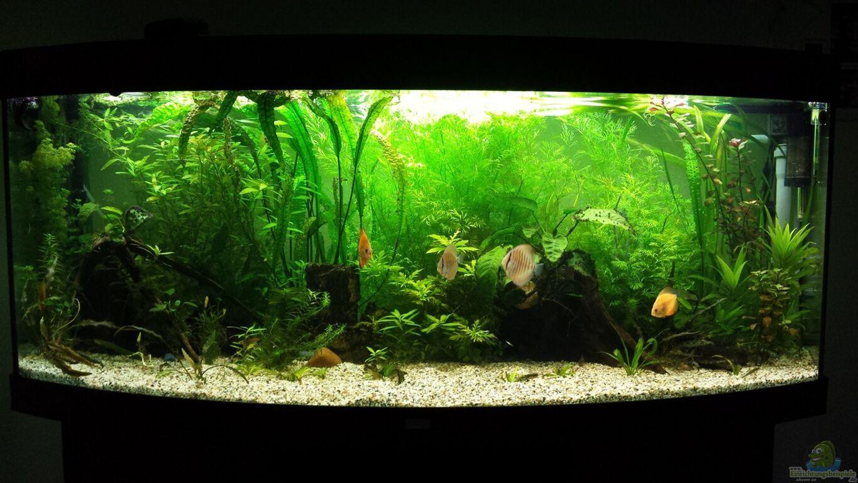 aquarium von martin diskus. Black Bedroom Furniture Sets. Home Design Ideas