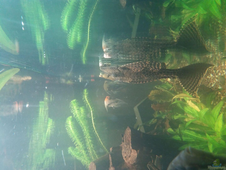 Aquarium von ronny haeringer becken 31561 for Aquarium becken