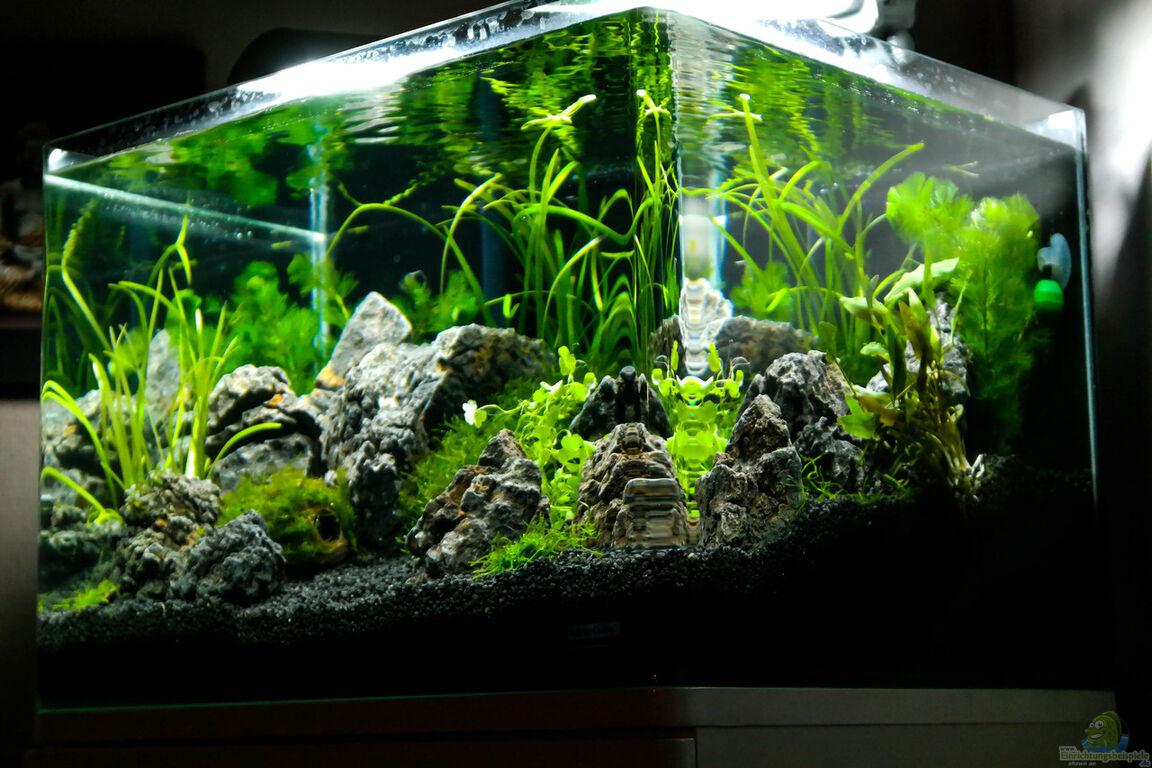 aquarium datnicky nickys 50 liter scaper 180 s tank