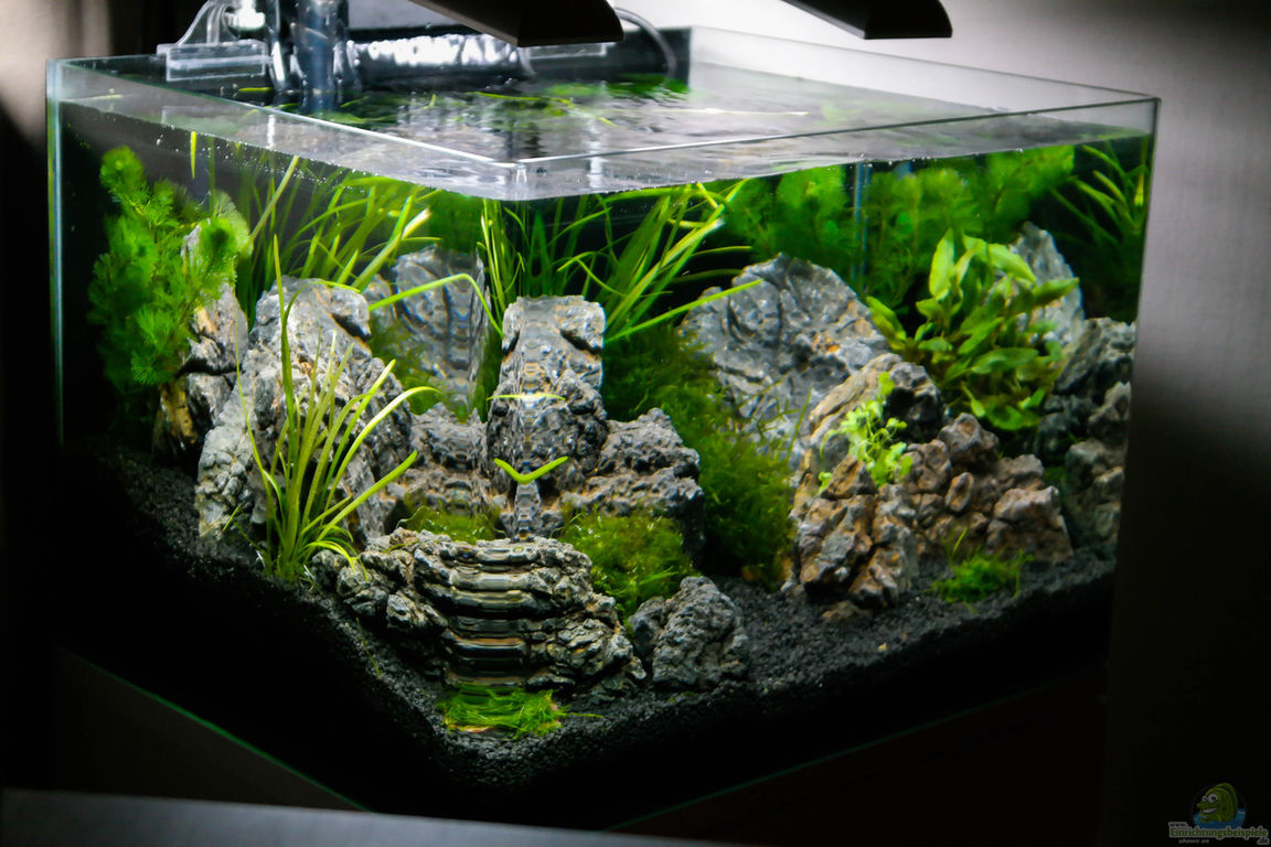 aquarium von datnicky nickys 50 liter scaper s tank. Black Bedroom Furniture Sets. Home Design Ideas