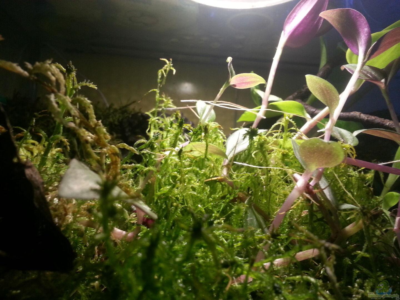 Pflanzen im teich geosesarma hagen terrarium aus for Jungfische im teich