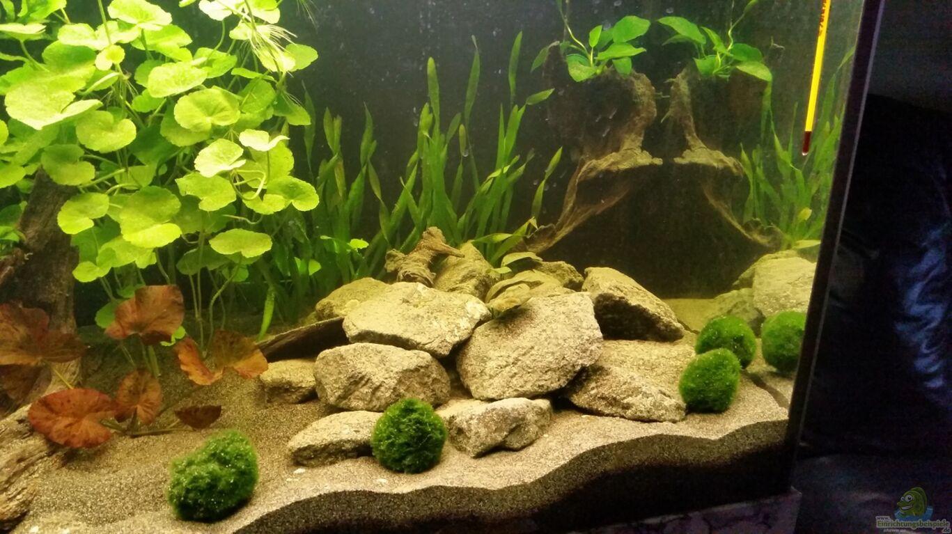 aquarium von ralleplus fara haster bergsee. Black Bedroom Furniture Sets. Home Design Ideas