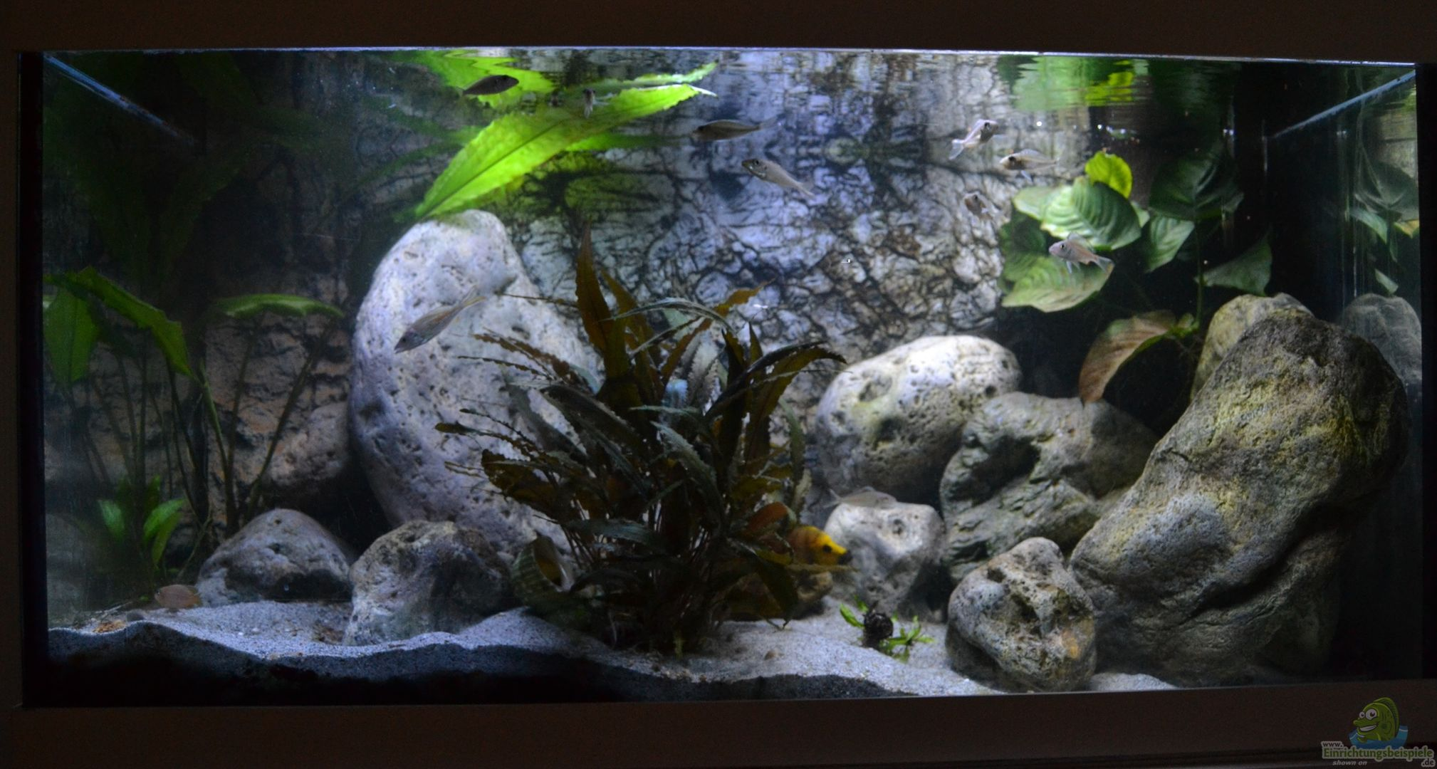 aquarium von falleb 31668 steine sand. Black Bedroom Furniture Sets. Home Design Ideas