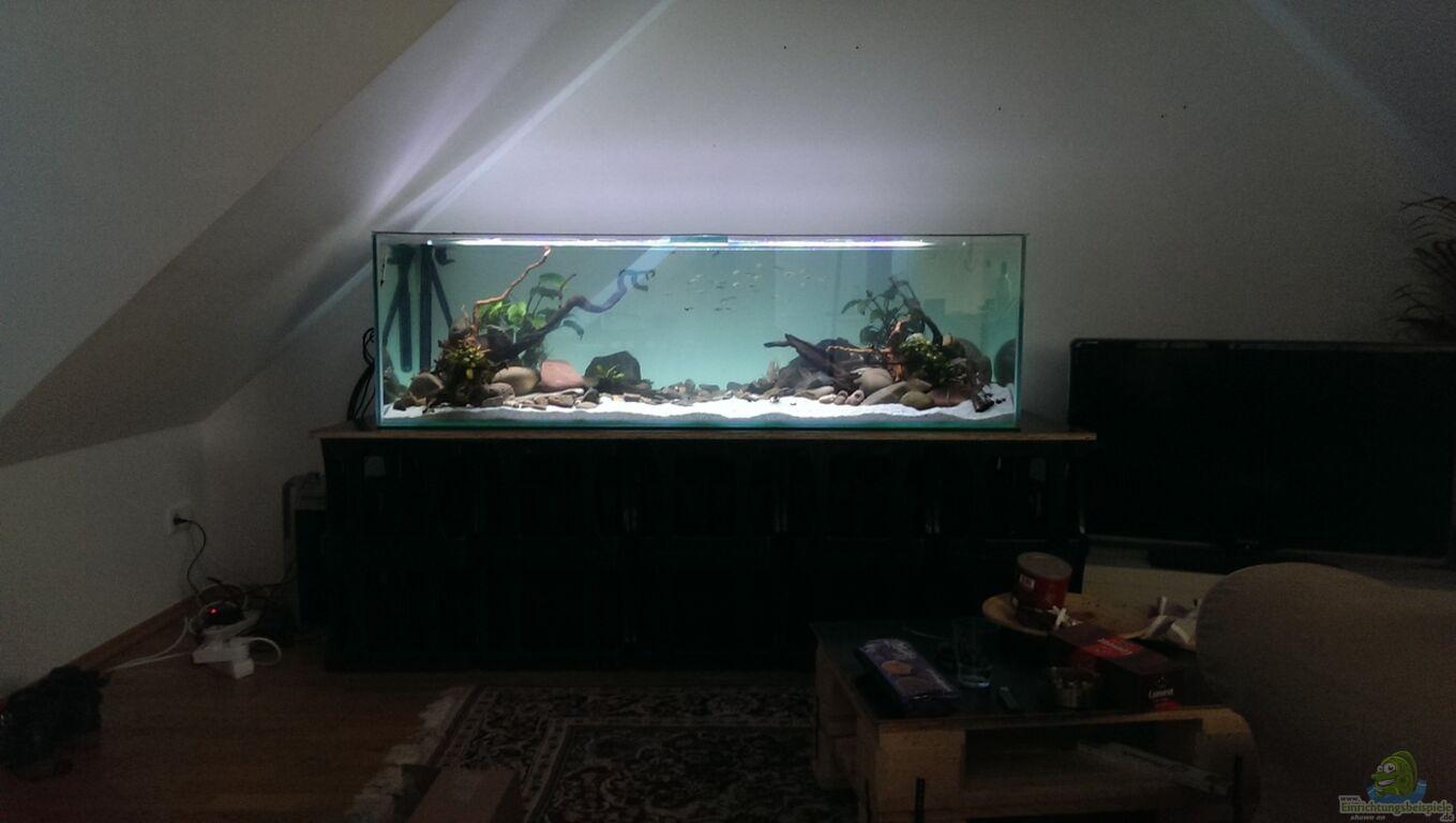 Aquarium von Dubfocus: Mittelamerika / Aquascape