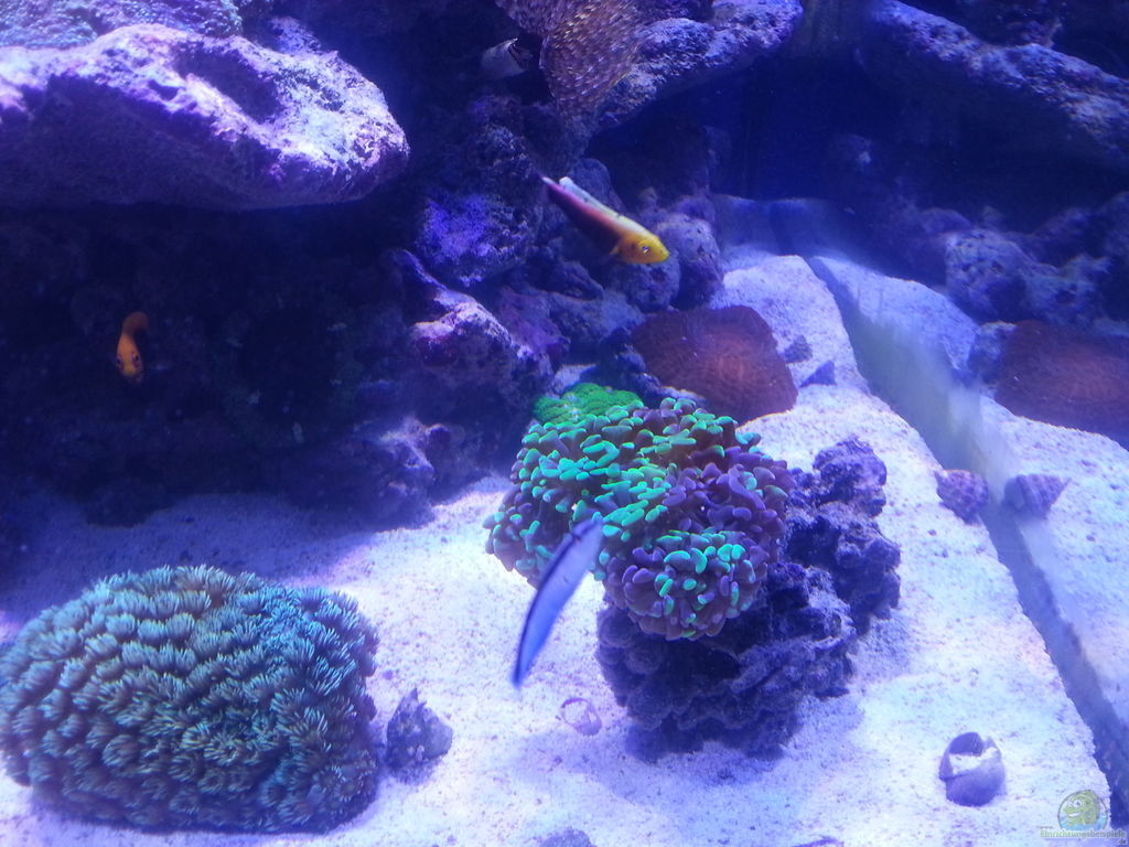 Aquarium von cuny becken 31733 for Aquarium becken