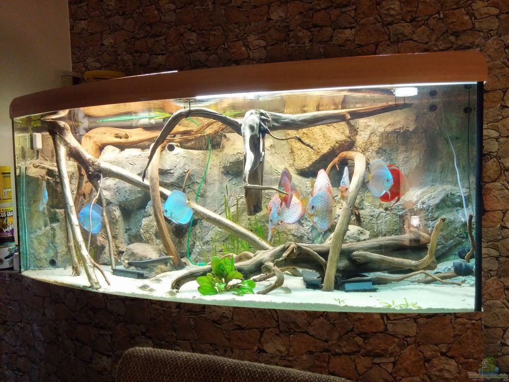 Bersicht ber die hauptbilder aus den 8490 for Boden aquarium