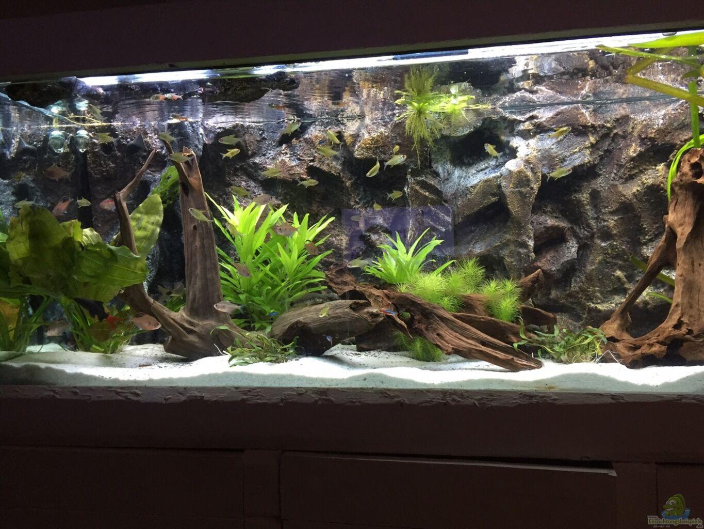 aquarium deko | möbelideen. uncategorized : deko fur aquarium ...