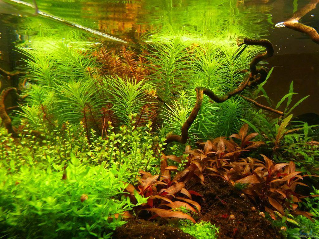 aquarium von yoshi maus m rchenwald. Black Bedroom Furniture Sets. Home Design Ideas