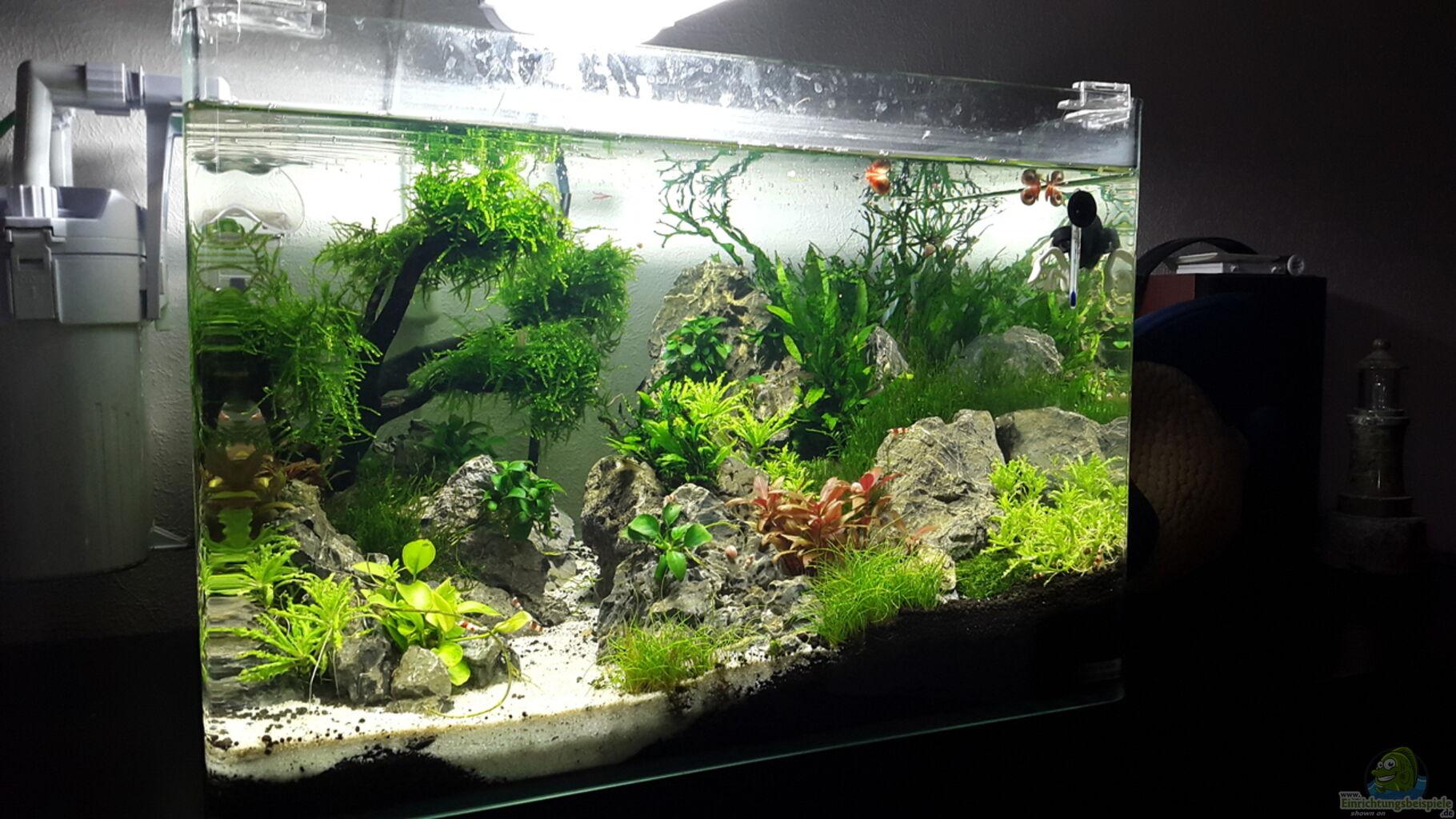 aquarium von roborow scapers tank. Black Bedroom Furniture Sets. Home Design Ideas