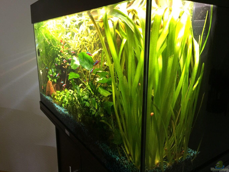 aquarium von yasmine 125l gesellschaftsbecken. Black Bedroom Furniture Sets. Home Design Ideas
