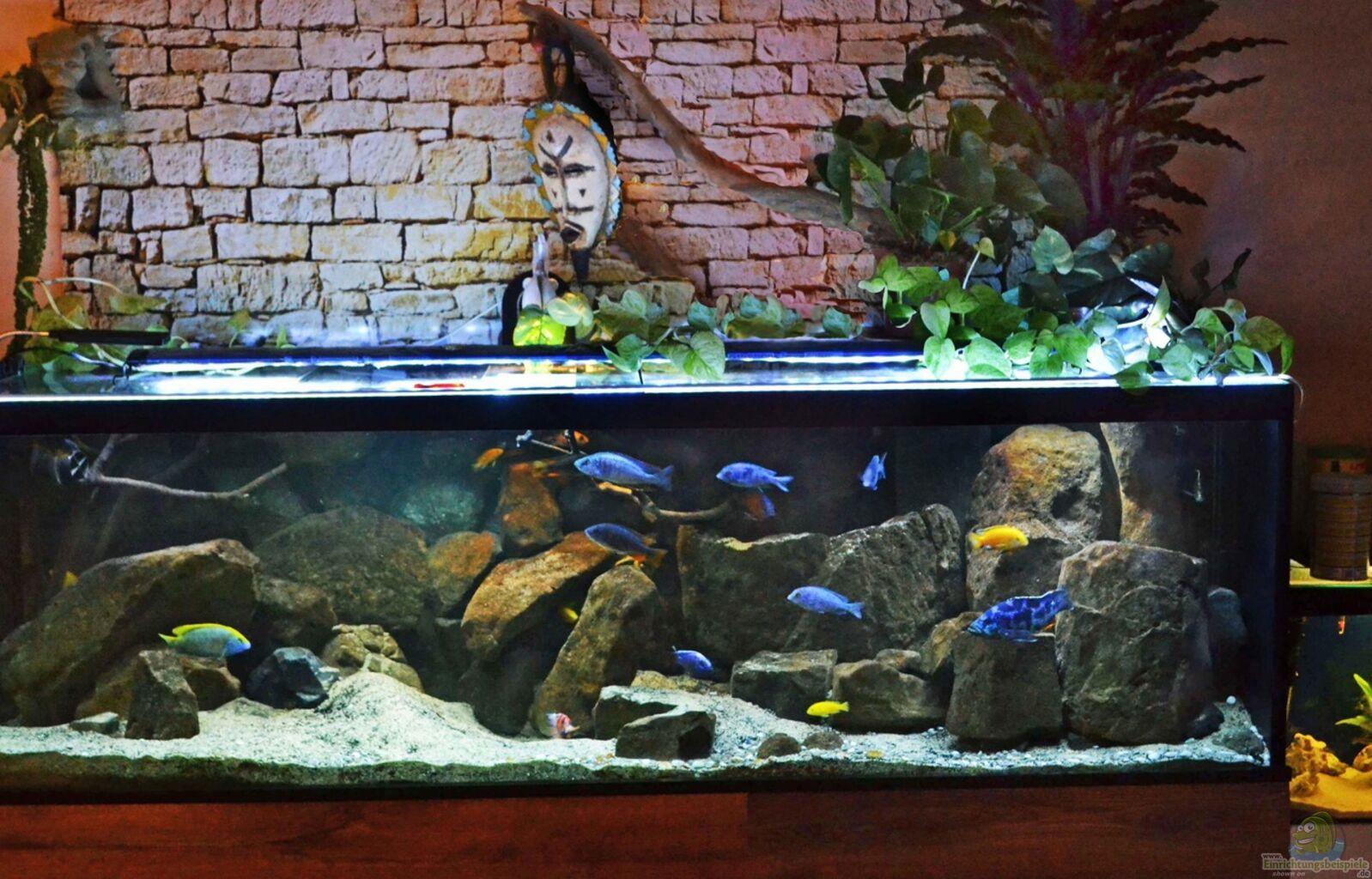 aquarium von midgard malawi non mbunas. Black Bedroom Furniture Sets. Home Design Ideas