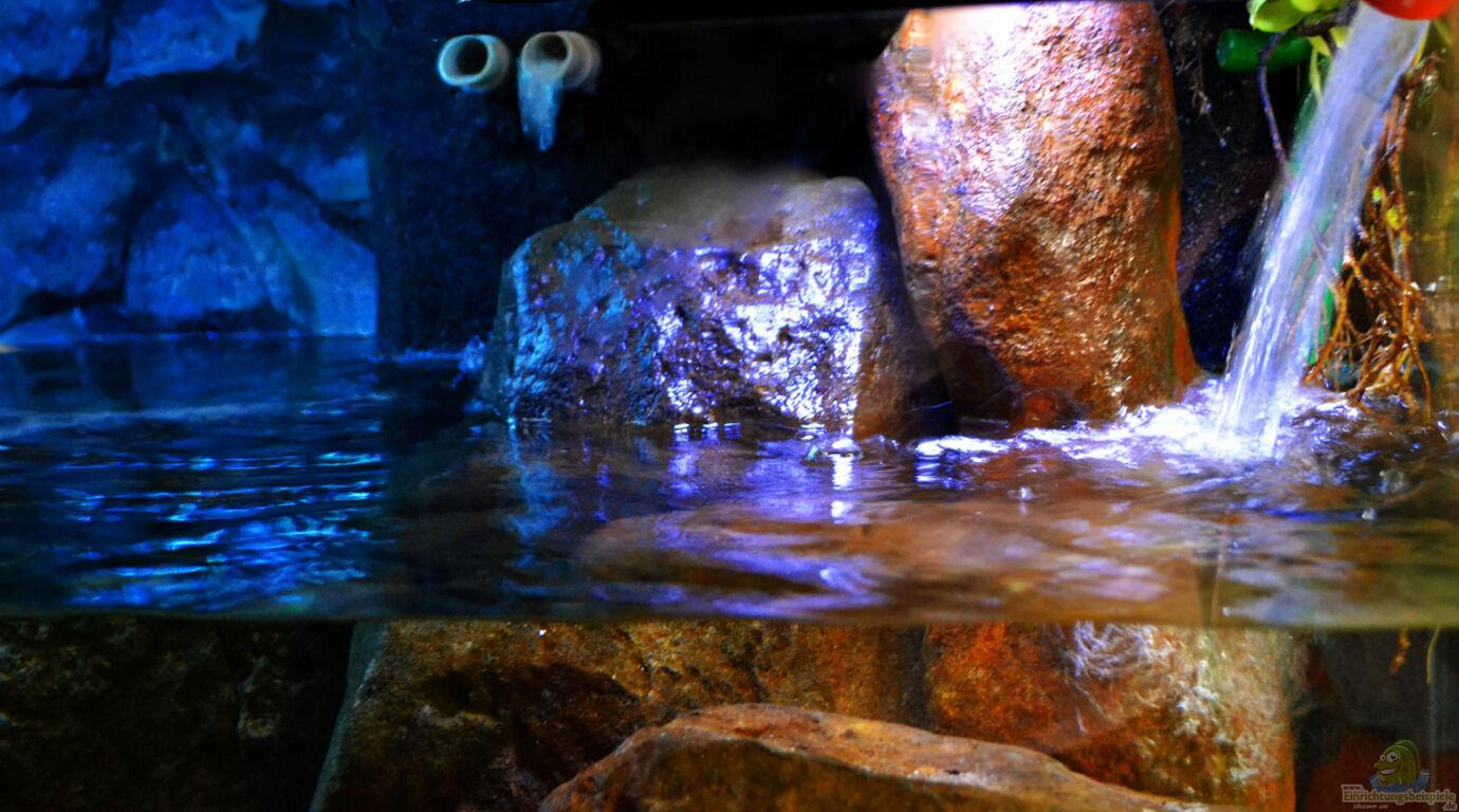 Aquarium von midgard malawi non mbunas for Aquarium wasserwechsel