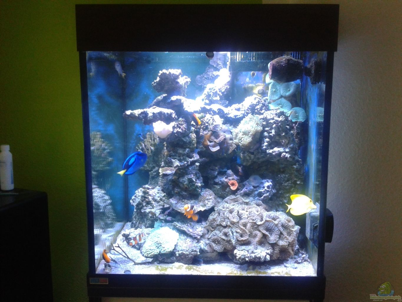 Aquarium von alex knorr riffkanten cube for Aquarium cube