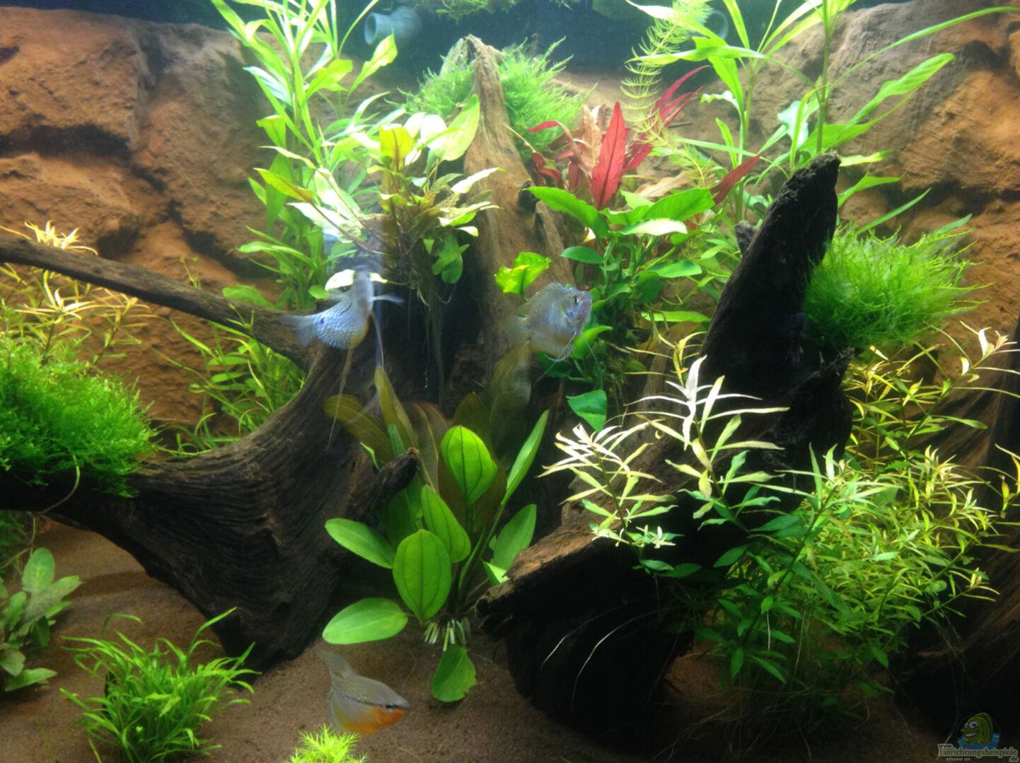 aquarium von ronnsch 31942 h ngendes eckaquarium. Black Bedroom Furniture Sets. Home Design Ideas