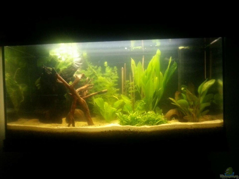 aquarium von der tiroler kleines amazonasbecken. Black Bedroom Furniture Sets. Home Design Ideas