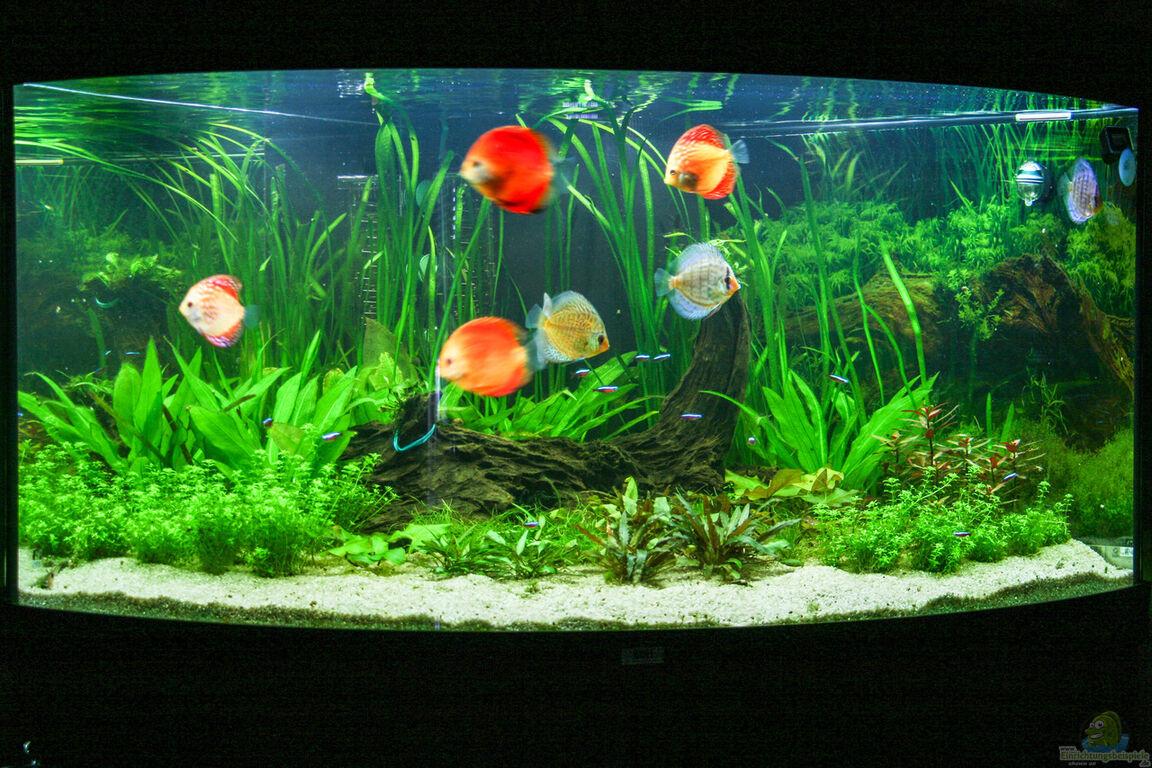 aquarium von phil cave diskus amazonas. Black Bedroom Furniture Sets. Home Design Ideas
