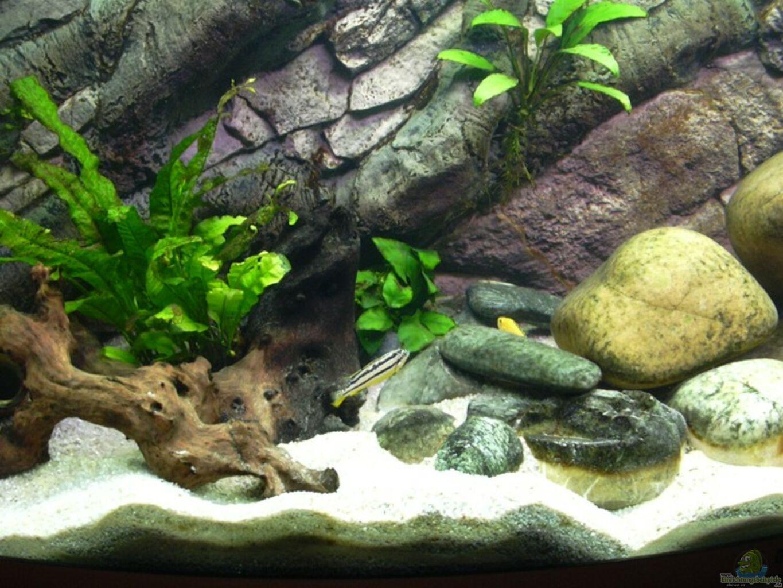 aquarium von richard frantzen becken 320. Black Bedroom Furniture Sets. Home Design Ideas